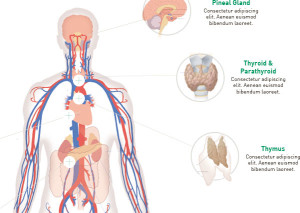 Endocrine Science